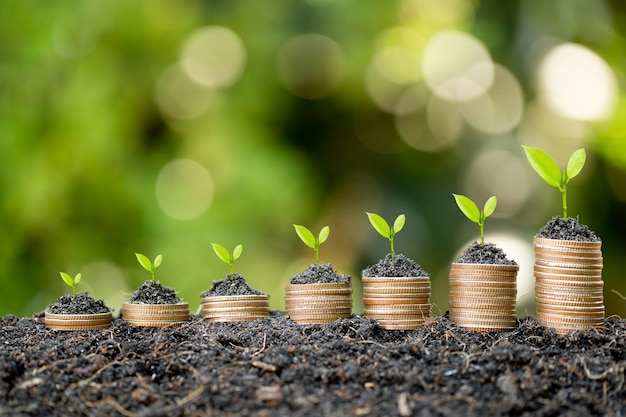 The coins are stacked on the ground and the seedlings are growing on top