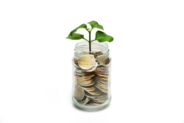 Coins in glass jar with the small tree