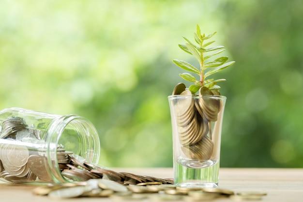 Monete in un bicchiere con un piccolo albero