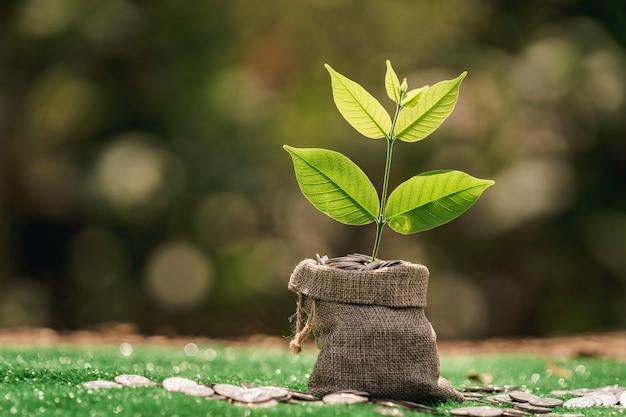 緑の草の上で植物が成長する布製バッグのコイン。お金の節約と成長の概念