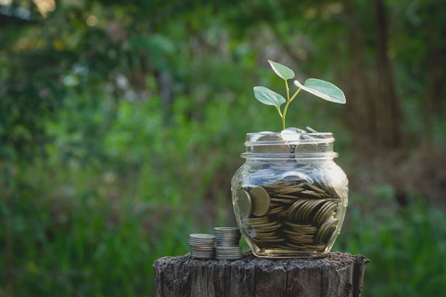 Монеты в банке на фоне природы, бизнес-концепция концепции
