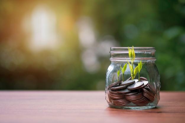 Монеты внутри банки с ростом деревьев на фоне зелени. дивиденды и прибыль от концепции сбережений и инвестиций.