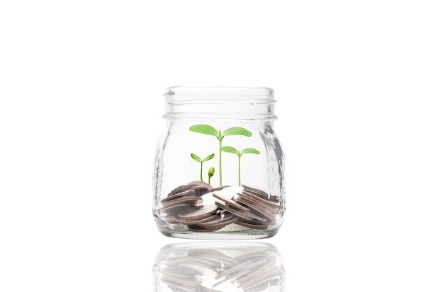 植物、投資利益、配当金節約の概念を備えた透明な貯金瓶の中にお金をコインします。