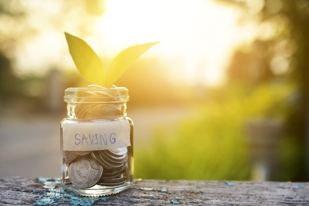 Coins money in jar bottle on wood table sunlight nature green background