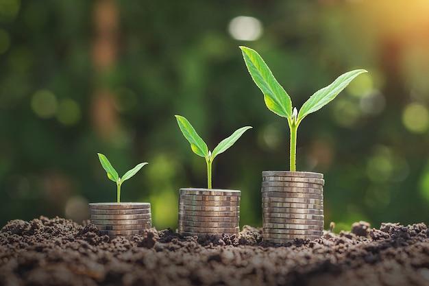 단계 성장 식물과 햇빛 배경으로 동전 스택. 돈을 절약하는 개념