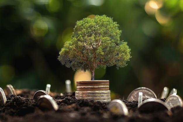 コインは、段階的に成長する植物と太陽の光の背景とスタックします。お金を節約する概念