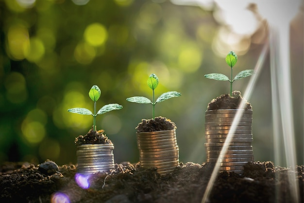 Coins stack with step growing plant and sunshine background. concept saving money