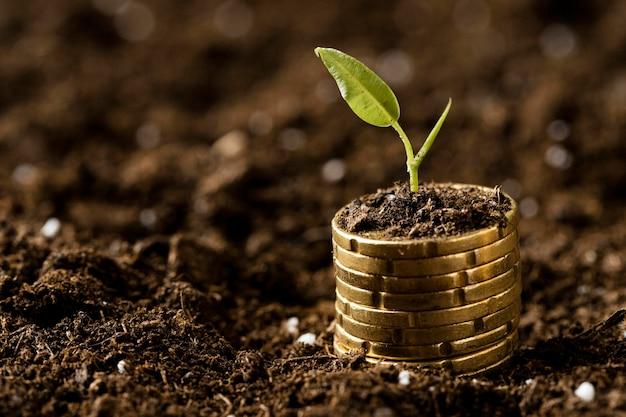 Монеты сложены на грязи с растением и копией пространства