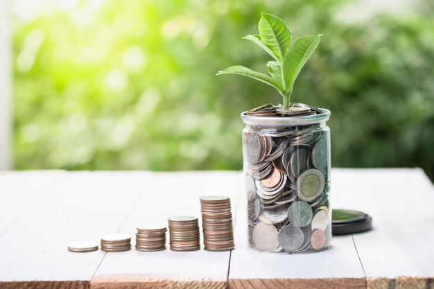 Coins stacking with growing plant on greenery blurred background and sunlight.