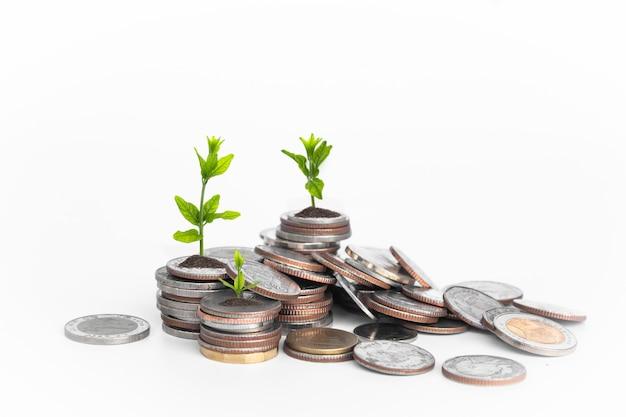 Монеты с молодым растением на белом столе.