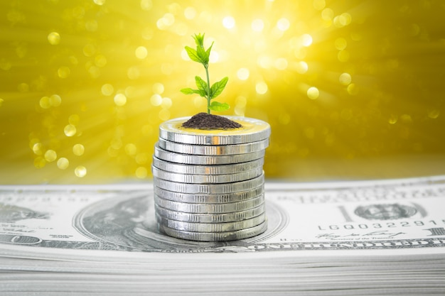 Coins with young plant on table with golden backdrop blurred and money