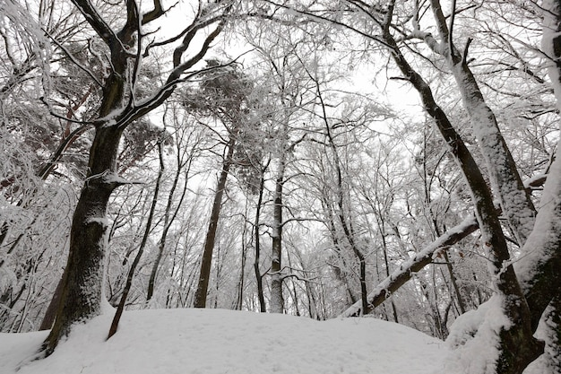 Холодные и снежные зимы, полностью покрытые снегом лиственные деревья зимой, деревья, растущие в парке или в лесу в белом снегу после снегопада