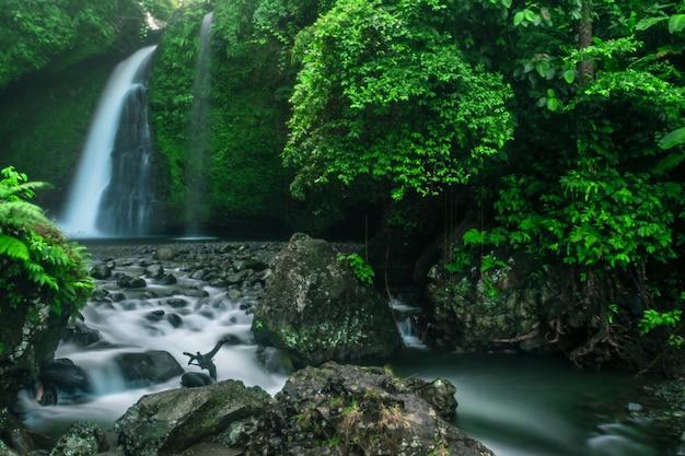 滝の涼しくて緑の雰囲気のある寒い朝