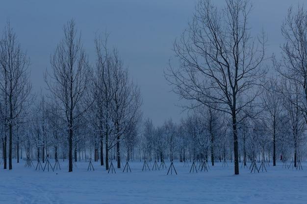 300 년 공원 상트 페테르부르크, 러시아에서 추운 겨울 저녁.