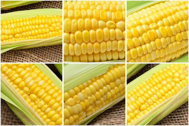 Collage of corns on gunny