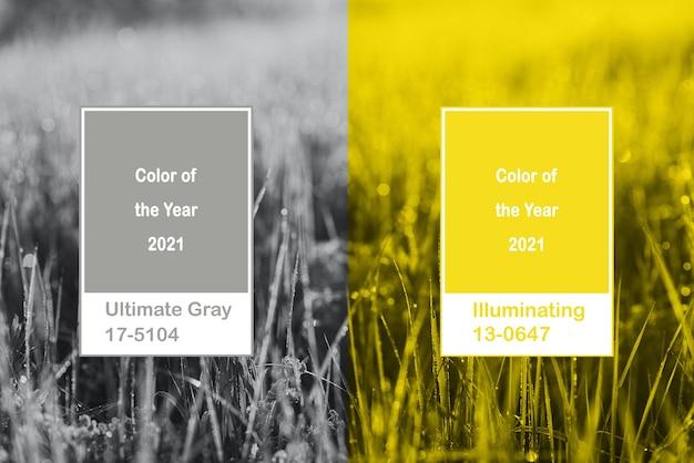 잔디와 콜라주 조명 및 궁극적 인 회색 색상