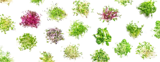 Коллаж из различных микрозелени на белом фоне. выборочный фокус. природа.