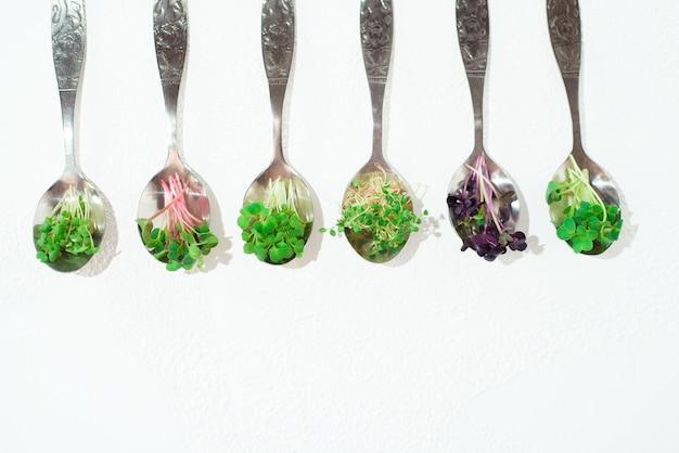 Коллаж из различных микрозелени на белом фоне.