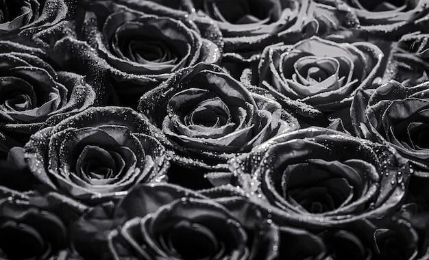 Коллаж из красных роз. букет из свежих роз, цветок яркий фон. крупным планом макросъемки красной розы. цветочный магазин. черное и белое.