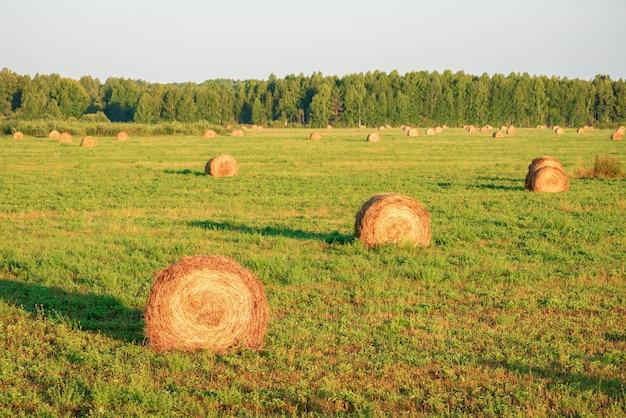 Собраны тюки сена в поле.