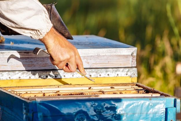 벌집에서 꿀을 수집합니다. 양봉. 벌집의 프레임입니다.