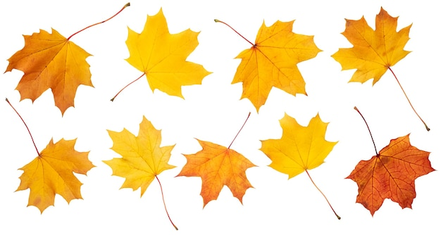 Collection of autumn leaves on white background. with shadows, clipping path  for isolation without shadows on white
