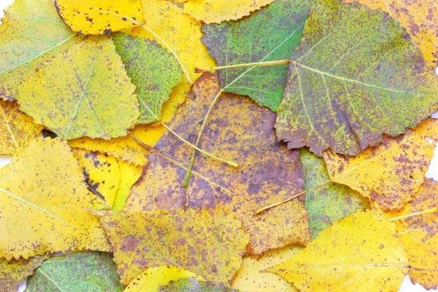 Коллекция красивых красочных осенних листьев на белом фоне