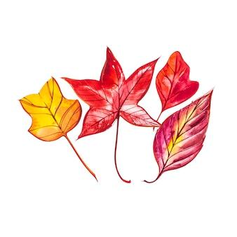 Коллекция красивые красочные осенние листья изолированы. акварельные иллюстрации.