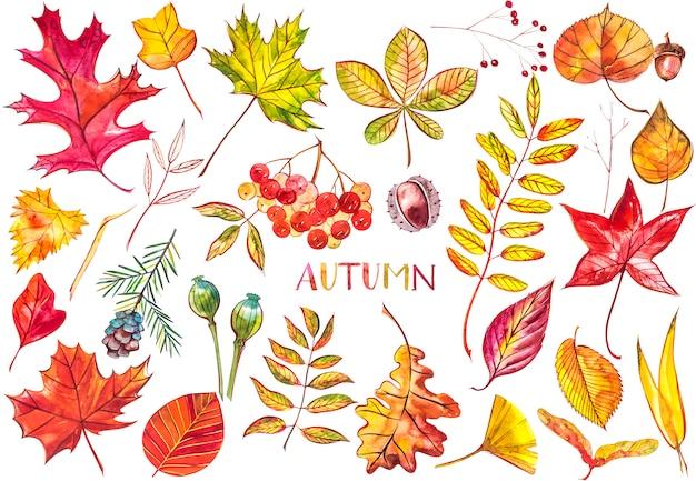 コレクション美しい色鮮やかな紅葉が分離されました。水彩イラスト。