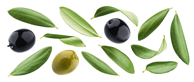 Collection of black and green olives with leaves isolated on white background with clipping path