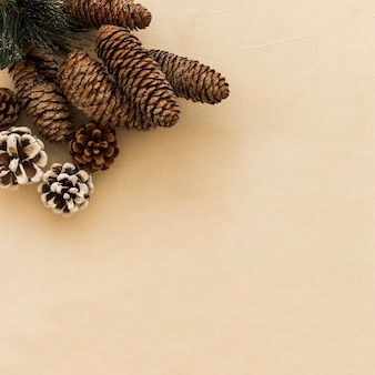Collection of decorative snags and coniferous twig