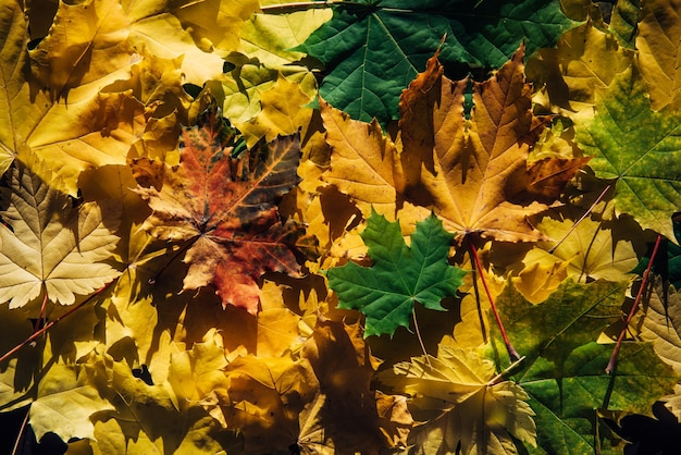 Collection of different fall leaves, texture background.