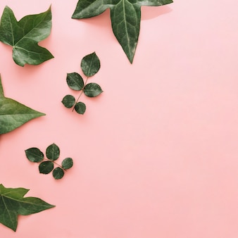 Collection of different green leaves on pink surface