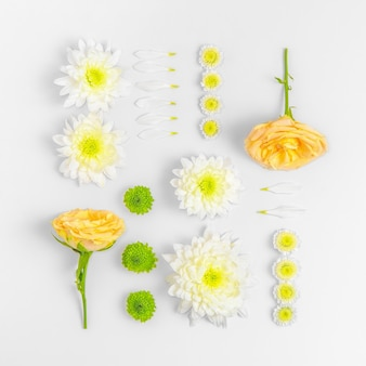 Collection of flowers isolated on white