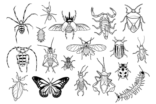 Collection hand drawn of bugs