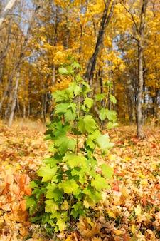 Коллекция красивых красочных осенних листьев