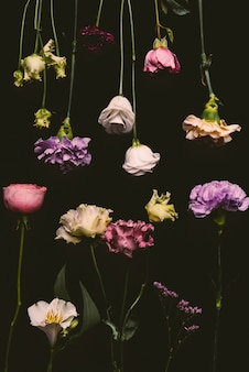 Collection of beautiful fresh blooming flowers isolated on black