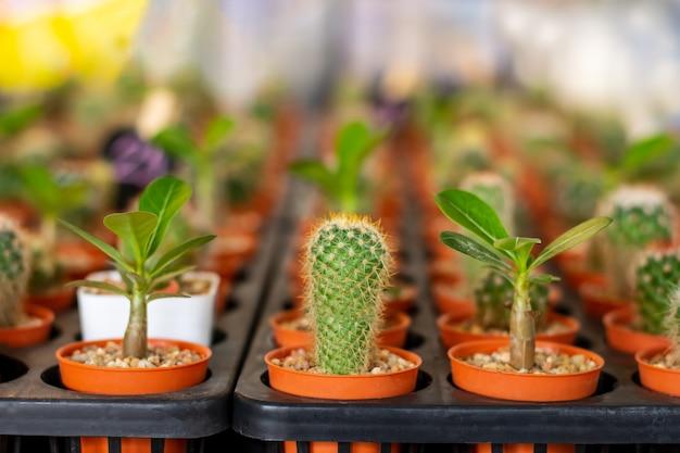 さまざまな鉢のサボテンと植物のコレクション床に鉢植えのサボテン
