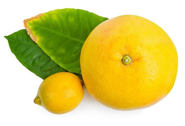 흰색 배경에 분리된 녹색 잎이 있는 감귤류 과일(자몽과 레몬)