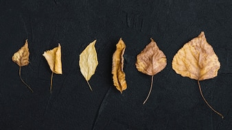 Collection of dried leaves