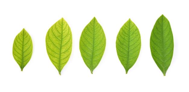 정원의 컬렉션은 흰색 바탕에 나뭇잎. 평면도.