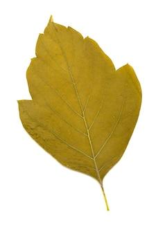 白い背景で隔離の葉のコレクション