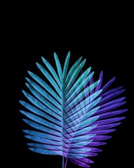 열 대 잎의 컬렉션, 검은 공간 배경으로 이국적인 색상의 단풍 식물.