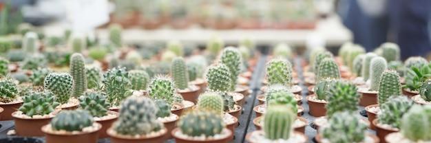 様々なサボテンの植物のコレクションと異なるポットが庭や農場で飾ります。テキストバナーのためのスペース。