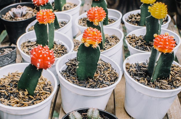 Сбор различных кактусов в разных горшках