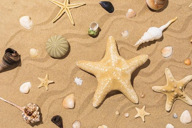 Коллекция различных ракушек и морских звезд на песке в солнечный день