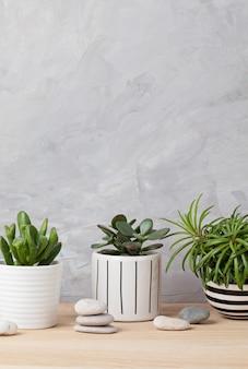 Коллекция различных суккулентов и растений в цветных горшках. кактус в горшке и комнатные растения против светлой стены. стильный интерьер домашнего сада