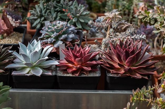 さまざまな鉢植えのさまざまな熱帯サボテンと多肉植物のコレクション