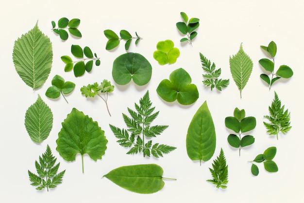 Сбор диких лесных листьев разных видов