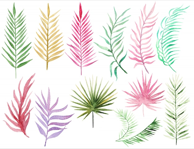 Collection palm leaves